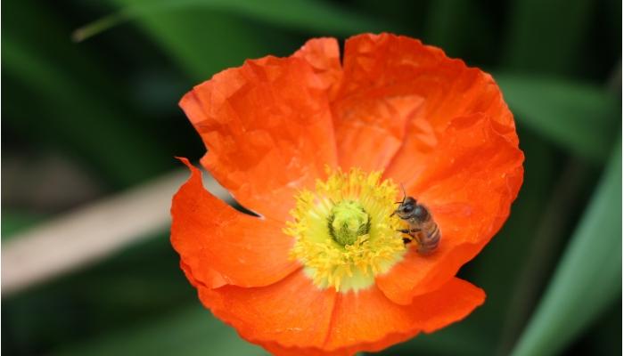 治療 花粉 症